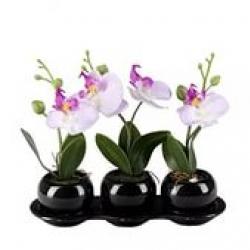 Орхидеи в стекле и в кашпо